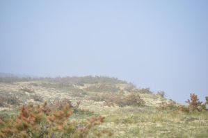 Shrubby cliff with fog by equustock
