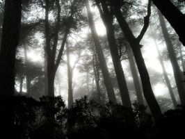 Dark forest by Elmyzabeth