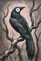 "Black Bird Watercolour 7""x5"" by shmeeden"