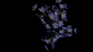 Forget Me Nots by IntoTheFrisson
