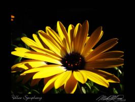 Yellow Symphany by DistantVisions