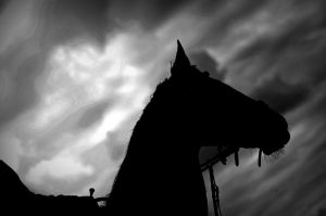 Shadow Of A Horse by almasart