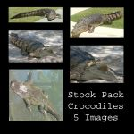 Stock Pack - Crocodiles by Gracies-Stock