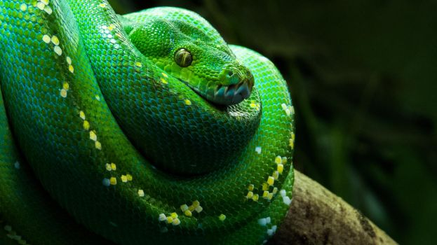 Green Snake by Willi580