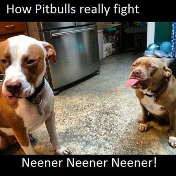 how Pitbulls REALLY fight by SoulEaterQueen