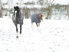 Rocky trotting in the snow by ponychops