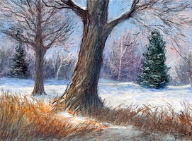 Winter Trees by ghost549