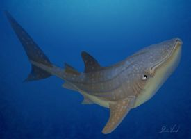 Whale shark 2012 by feeves