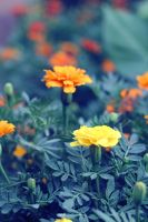 Yello and Orange by fahadee