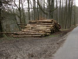 wood pile - Holzstoss 2 by archaeopteryx-stocks