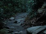 The Mingo Trail by HauntingVisionsStock