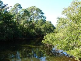 Cocohatchee River by InfinityandOne