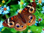 butterfly by abyss1956