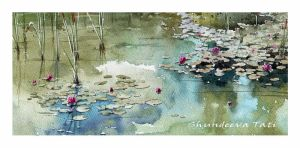 Water lilies by Takir