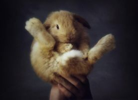 Bunny Balance by planet0