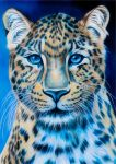 Chinese leopard by Sarahharas07