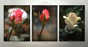 Gifts by hydrocean
