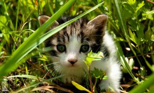 Kitten in a field by Ibicusun