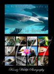 Wildlife Photography Calendar by Doubtful-Della