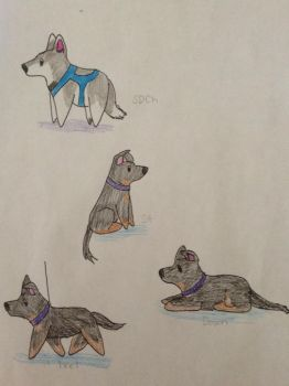 MK's Pyro and WWK's Lobo: Title and Training by WolfofWhiteKennels