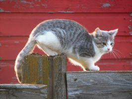 The Cats of Souris 3048 by CitizenOlek