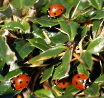 Ladybird outing by karliosi