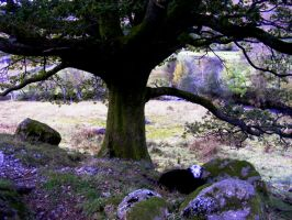 tree and sheep by popicok