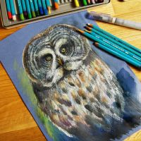 owl from zoo by bemain