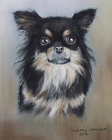 Long Haired  Chihuahua by DIXIEDEAN