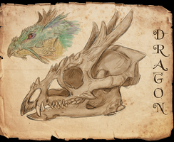 Dragon skull by Viergacht