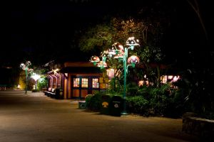 Animal Kingdom at Night 48 by AreteStock