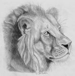 panthera leo by G-Smilodon