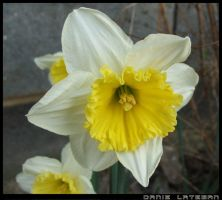 yellow and white by discodan