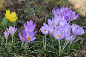 Spring Stock 10 by Malleni-Stock