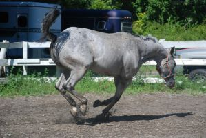 Appaloosa 68 by Spotstock
