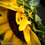 Her Folds Are Beautiful by NoraBlansett