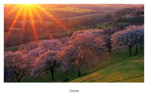 Caress by Capturing-the-Light