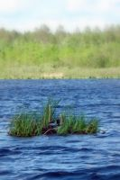 Flood of 2012 - Floating Nest by cordria
