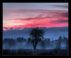 The Dreaming Tree by AdrianOlczyk