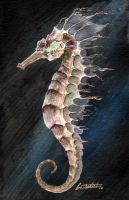 Seahorse by CoriDietsch