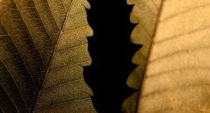 Overlapping veins by Plackman