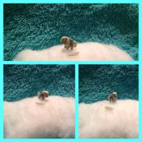 Derpy Hooves Micro Sculpture - Rice Sized!!! by chibipuppy713