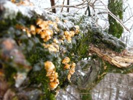 Frozen Moss and Fungi by EihwazCraftwork