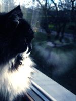 Twin for my cat. by windily
