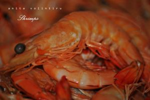 Shrimps by Rouge07