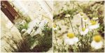 chamomile stair by alixia88