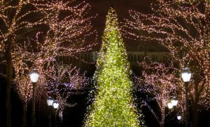 Christmas Tree -N- Lights Background by DanaHaynes