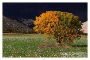 Two Tone Tree by PicTd