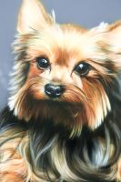 Airbrushing dog1 by ArtKleo