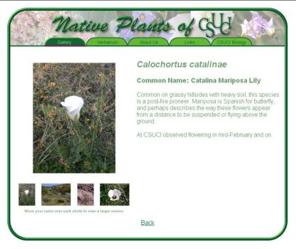 Native Plants of CSUCI by vasha
